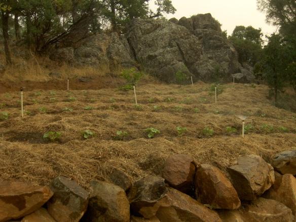 Soil fertility managment woodleaf farm for Fertile soil 07