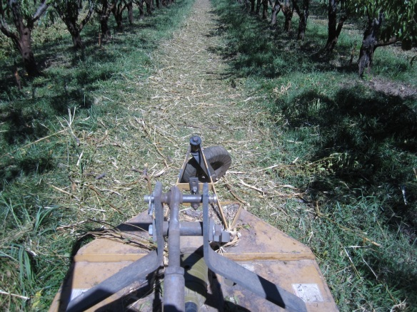 Two or three passes with the mower to break up the prunings as small as possible.  Soils with lots of biological activity can break down the chipped branch wood in just a few months.